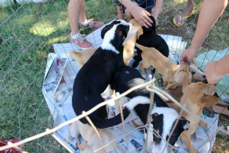 N�mero de animais abandonados ainda � alto em S�o Borja