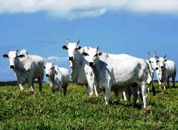 Inspetorias de Defesa Agropecuária são entregues na Fronteira Oeste