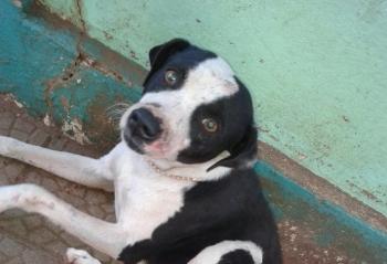 Denúncia sobre crime praticado contra cão em São Borja será apresentada no Ministério Público