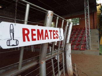 Remates irão movimentar o setor do agronegócio na Fenaoeste 2017
