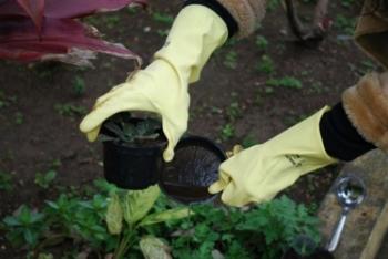 Aumentou a incidência dos focos de larvas do mosquito Aedes Aegypti em São Borja