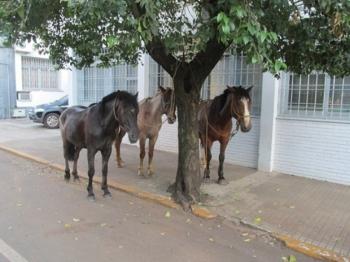 Sancionada a lei sobre o destino de animais de grande porte recolhidos na cidade