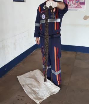 Cobra Cruzeira pica menina de 5 anos em São Borja